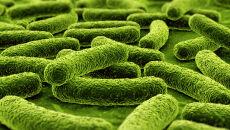 Podają bakteriom żelazo, a one produkują magnesy
