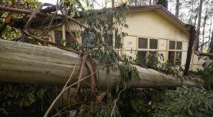 Skutki silnego wiatru na przedmieściach Melbourne (PAP/EPA/DANIEL POCKETT)